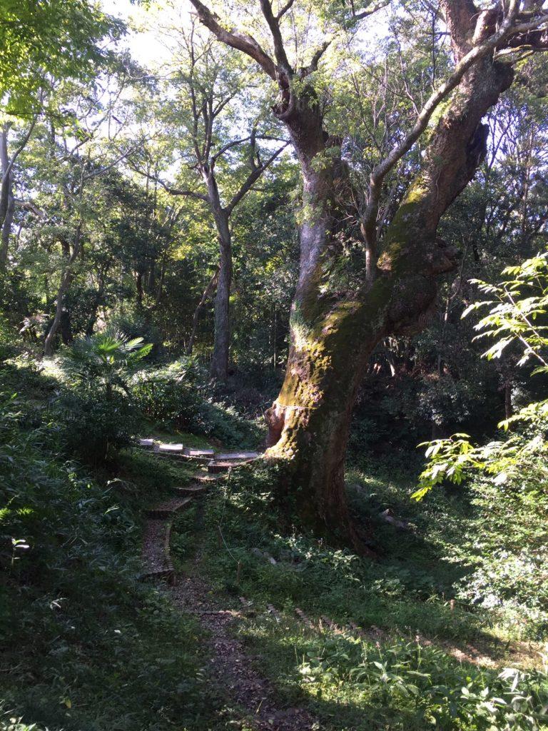 奈良豆比古神社(ならつひこじんじゃ)の樟の巨樹